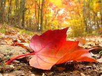 autunno-foglia-rossa-caduta